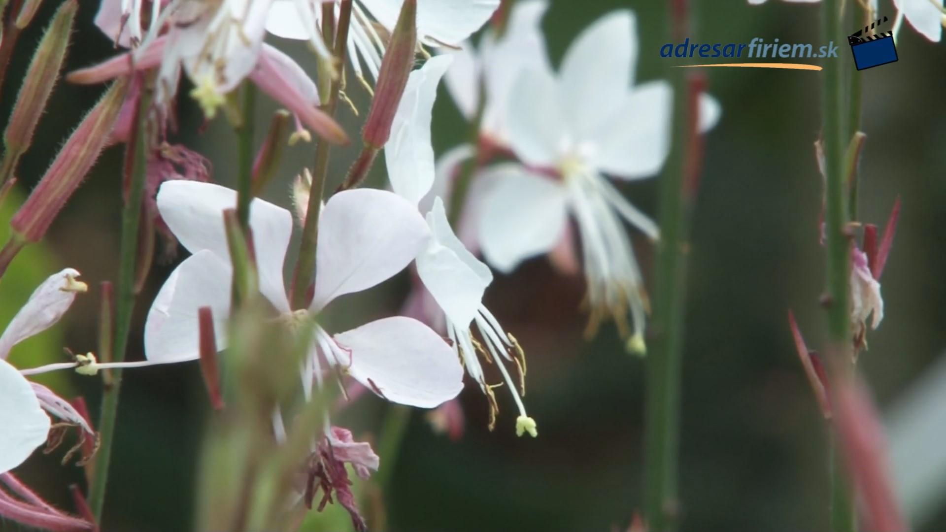 Video Záhradné centrum Vígľaš s.r.o. Vígľaš